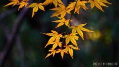 秋に染まる <28>