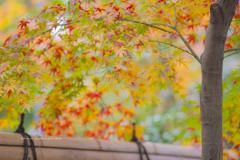 楽水園の紅葉