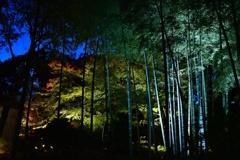 冬の夕暮れ 竹のライトアップ