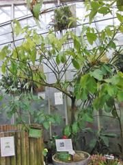 CIMG9714 東山植物園その12