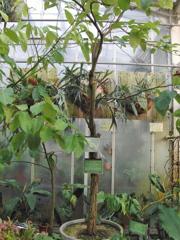 CIMG9710 東山植物園その11