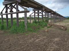 IMG_4148 流れ橋その6