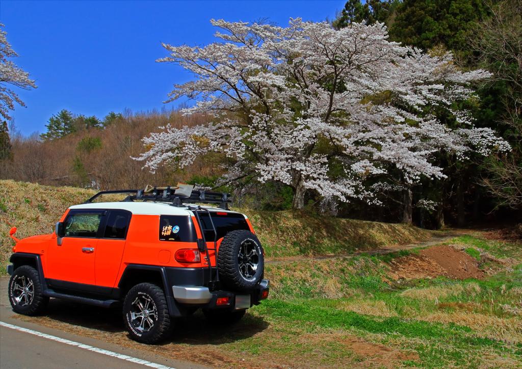 オレンジのFJクルーザー&桜