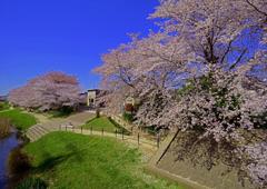 富士見親水公園 花真っ盛り