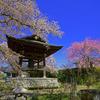 十連寺の鐘楼と桜
