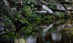 公園の池の端っこ