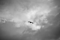 空を飛べたら・・・