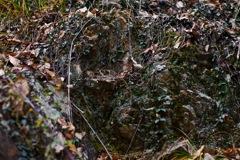 剥き出しの岩肌と枯れ葉達
