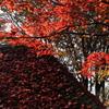 あずまやの屋根に積もった紅葉と紅葉