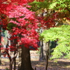 神代寺植物園の紅葉