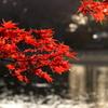 夕日の紅葉