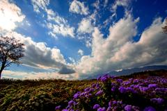 花畑と秋空