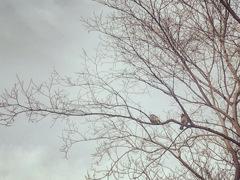 冬枯れの枝