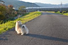 うわあー、新幹線やぁ!