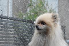 雨降り、つまらんなぁ♪