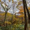 黄葉と泉ヶ岳