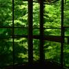 緑のラビリンス