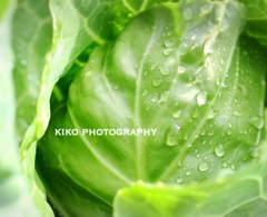『Cabbage*.+゚』