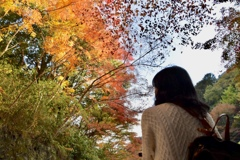 .*・゚見上げる秋….゚・*.