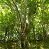森の静かなる巨木