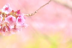 桜色舞うころ♡