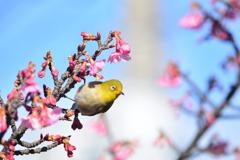 次はどの桜に移動すか?