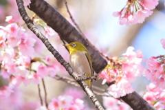 春・上野恩賜公園シリーズ3