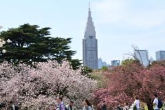 八重桜とNTTビル