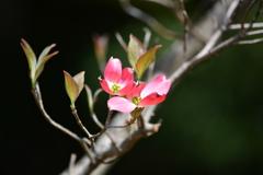 春・新宿御苑パート4