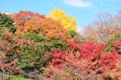 紅葉のグラデーション