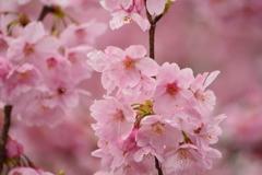 春・新宿御苑シリーズ