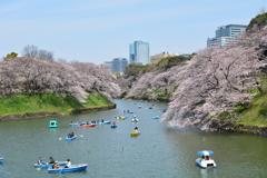 春の定番・風景