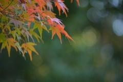 小石川後楽園・紅葉3