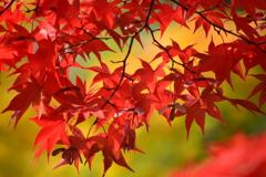 2016年・日本庭園・紅葉