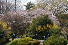 春・新宿御苑シリーズ3