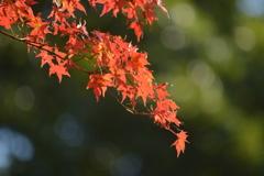 小石川後楽園・紅葉2
