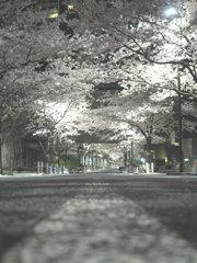 Sakura Tunnel #2
