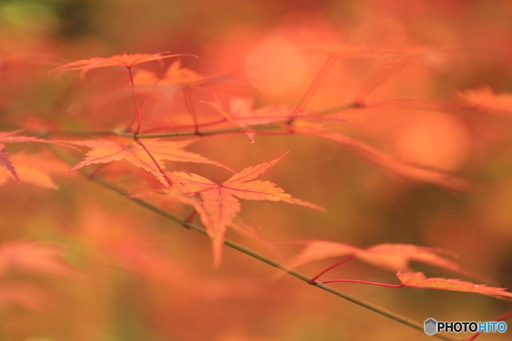 秋に染まる