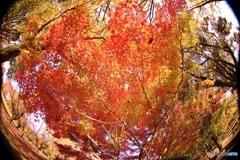 目が廻る秋