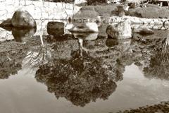 スナップ(日本庭園)