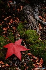 一枚の紅葉