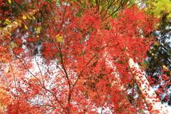 見上げれば秋色