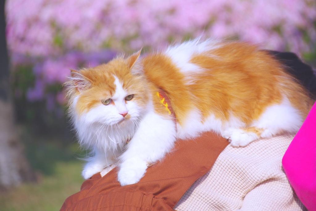 猫君と散歩#1