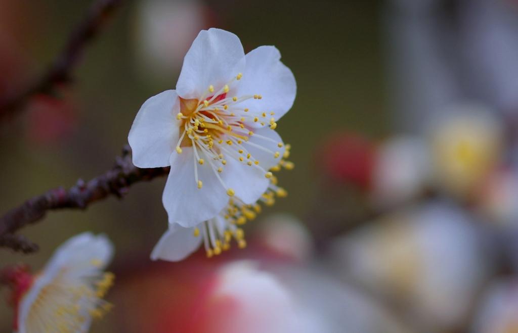 もーすぐ春やね#3 @佐布里台