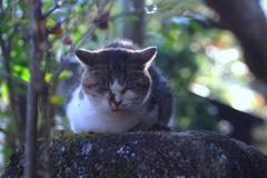 ずっと眠り猫 @妻籠宿