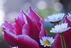 April Morning @My Home Gardening