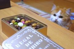 チョコに興味津々!