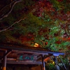 丈山苑ライトアップ #1