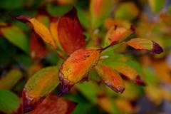 秋深まりて @我家のガーデニング