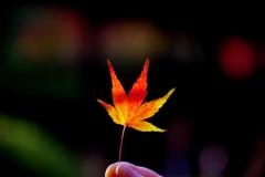 秋の終わりに#1 @丈山苑